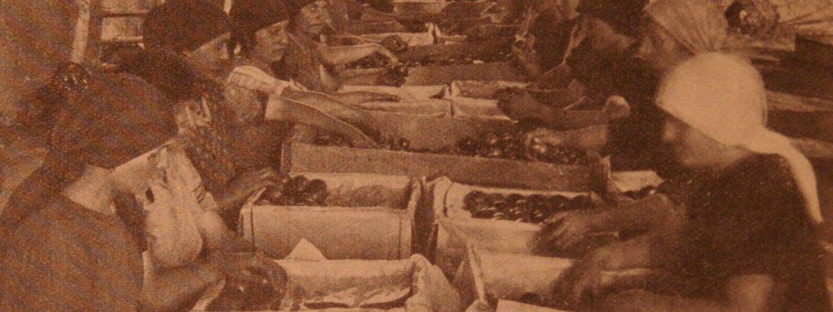Donne di Piacenza