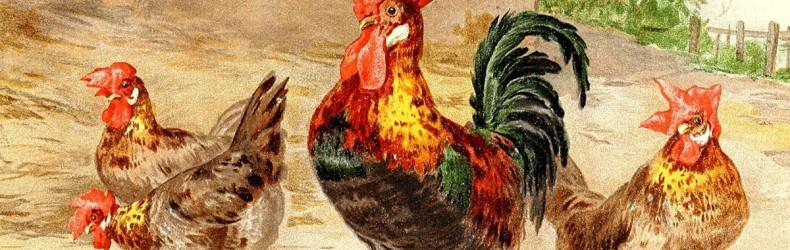I polli Teramani