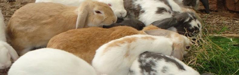 Gestione di un allevamento di conigli a ottobre