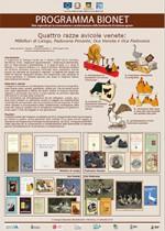 Quattro razze avicole venete: Millefiori di Lonigo, Padovana Pesante, Oca Veneta e Oca Padovana