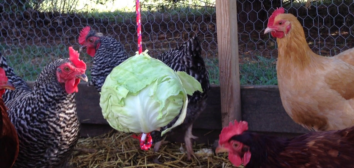 Orti domestici e allevamento familiare del pollame