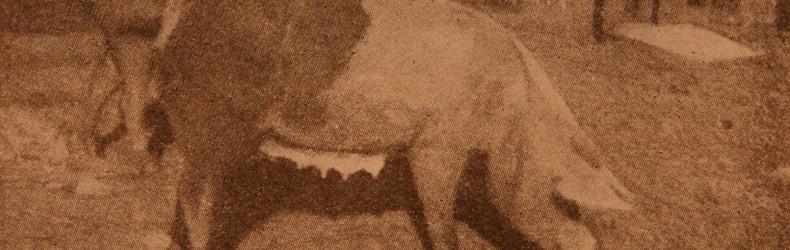 La suinicoltura lombarda agli inizi del secolo scorso