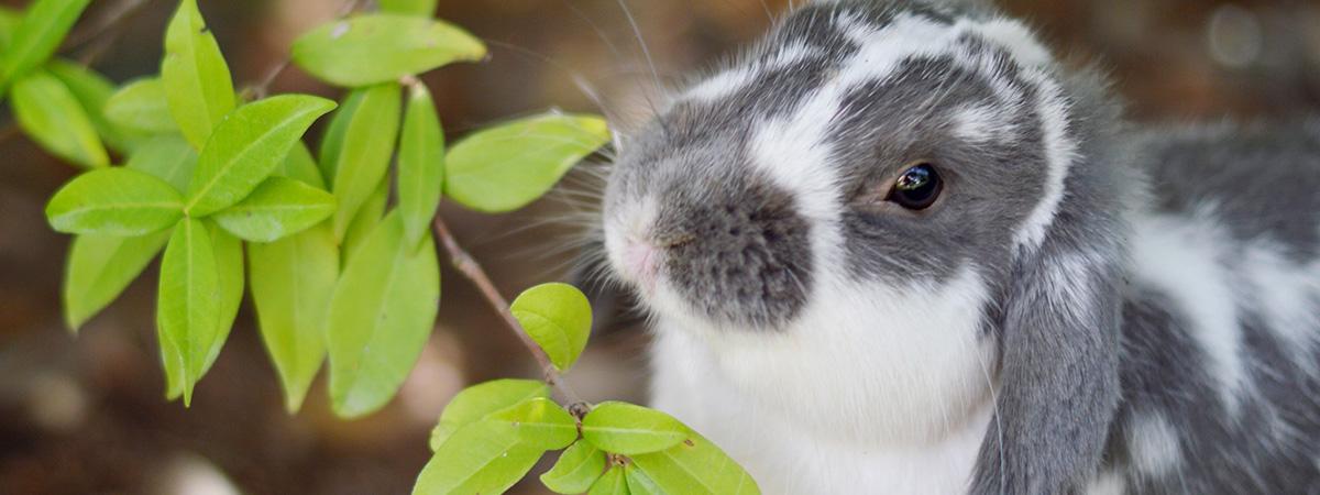 Una siepe per l'alimentazione dei conigli