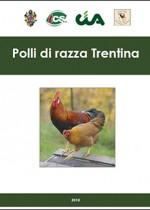Polli di razza Trentina