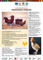 Padovana dorata