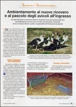 Ambientamento al nuovo ricovero e al pascolo degli avicoli all'ingrasso