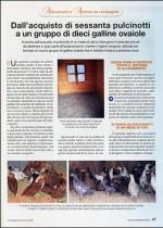 Dall'acquisto di sessanta pulcinotti a un gruppo di dieci galline ovaiole