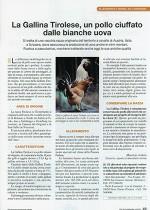La gallina Tirolese, un pollo ciuffato dalle bianche uova