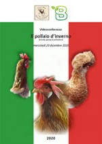 Il pollaio d'inverno - briciole sparse di pollicoltura