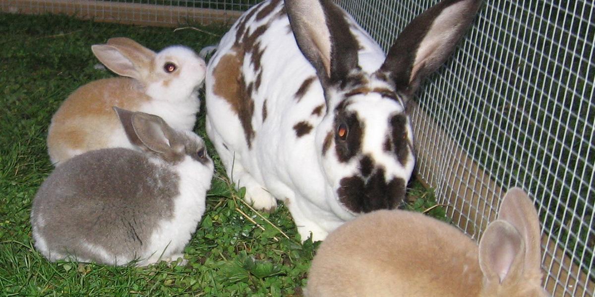 Ecologia del coniglio