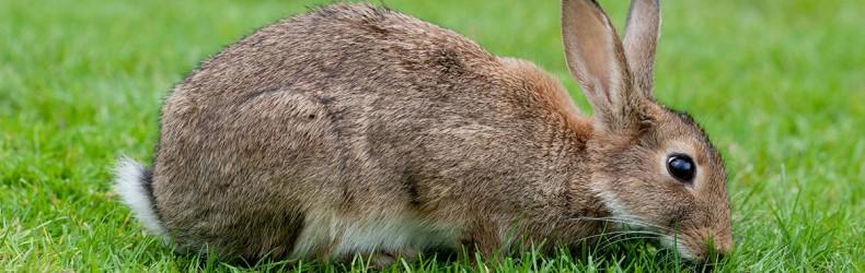 Erbe velenose per conigli