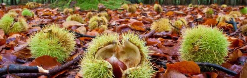 Frutti dimenticati e biodiversità recuperata