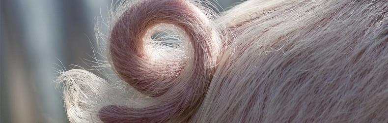 La morsicatura della coda tra i maiali