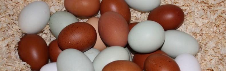 Le uova arcobaleno