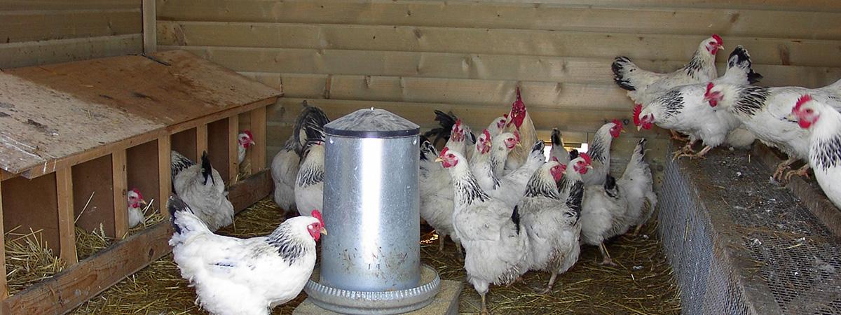 Nidi individuali per 25 galline