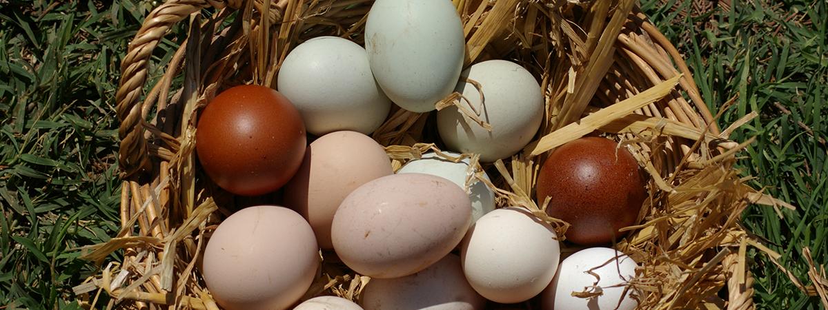 Pollame e orticoltura