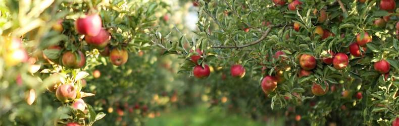 Il frutteto - Manuale tecnico pratico di coltivazione