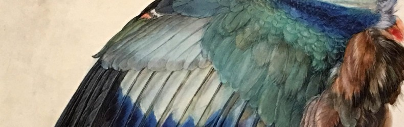 Comparazione tra gli arti degli uccelli e quelli dell'uomo